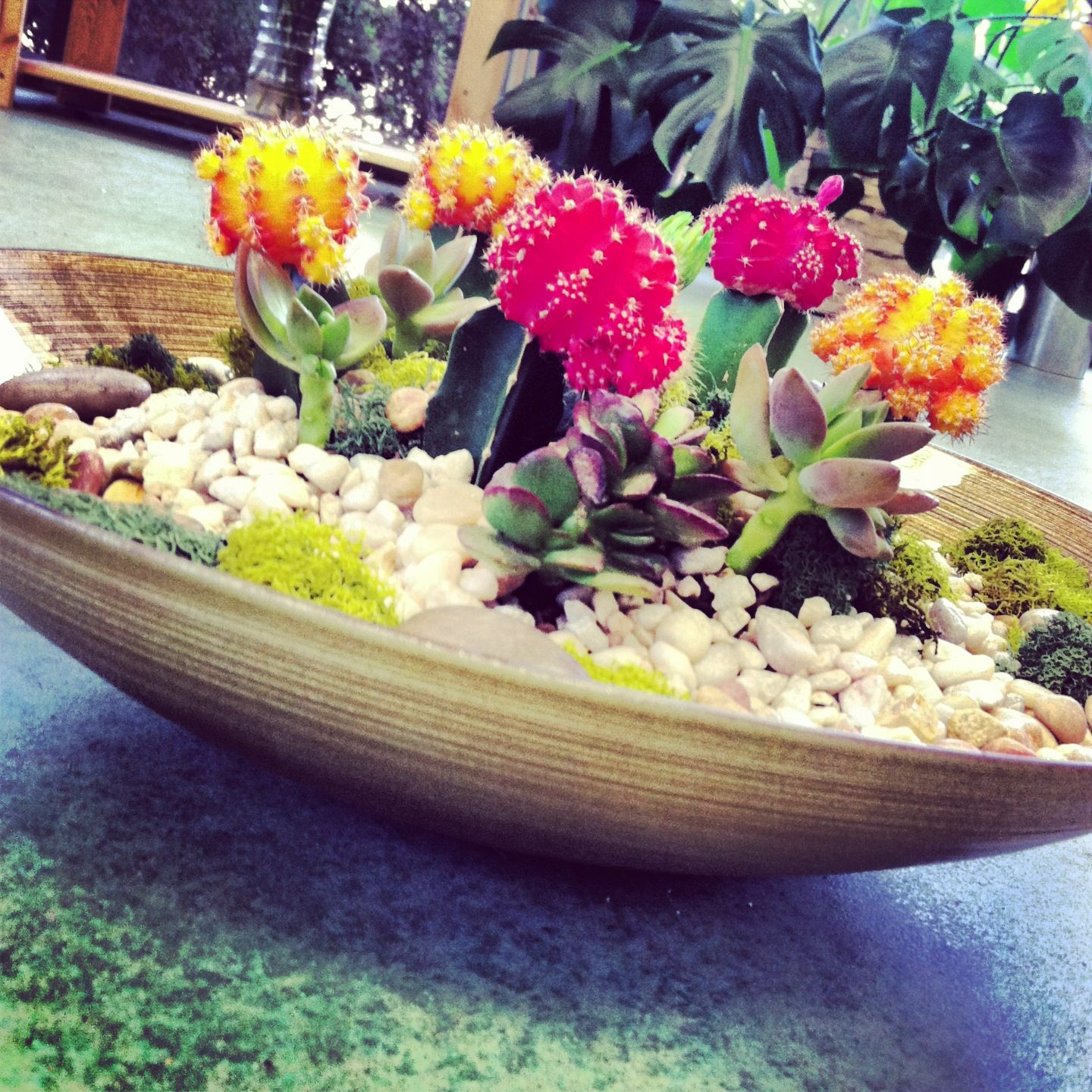 succulent and cacti dish garden