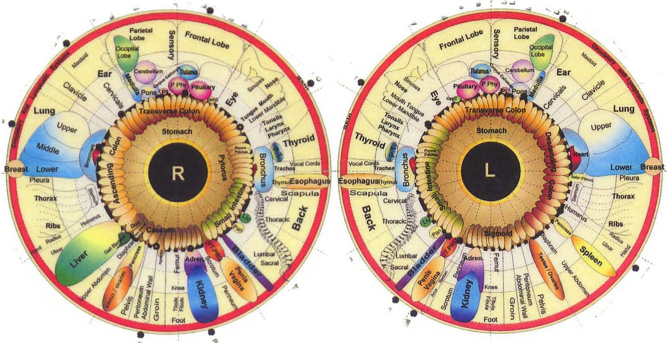 Riseearth what your iris says about you eye chart health fitness also world truth pinterest rh