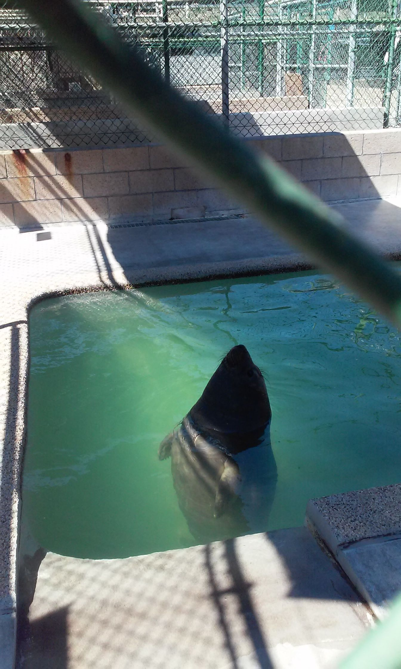 Awww Ellie Seal Pup Seal Pup Sea Lion Outdoor