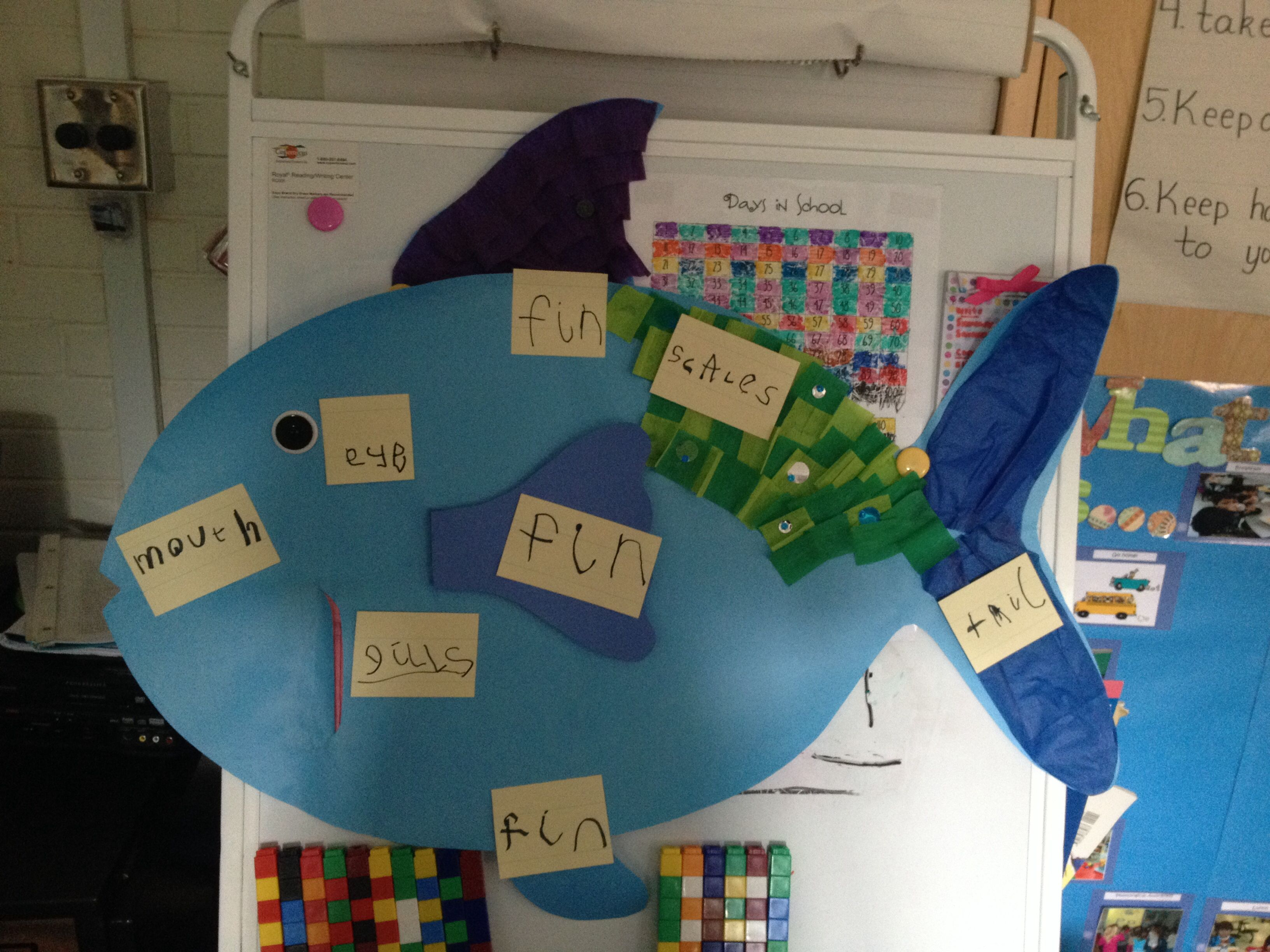 Labeling The Parts Of A Fish With Prek