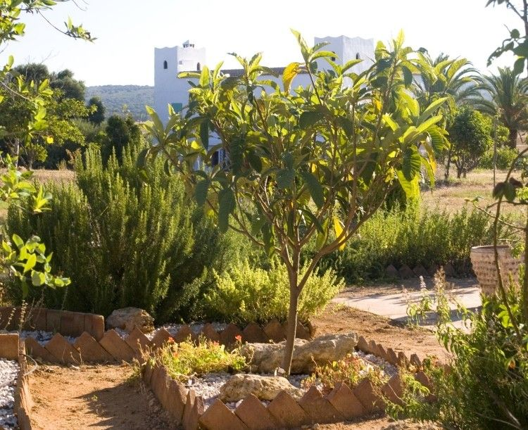Pflanzen Unter Obstbäumen  Obstgarten Mediterraner Garten  Gestaltung Unterpflanzung