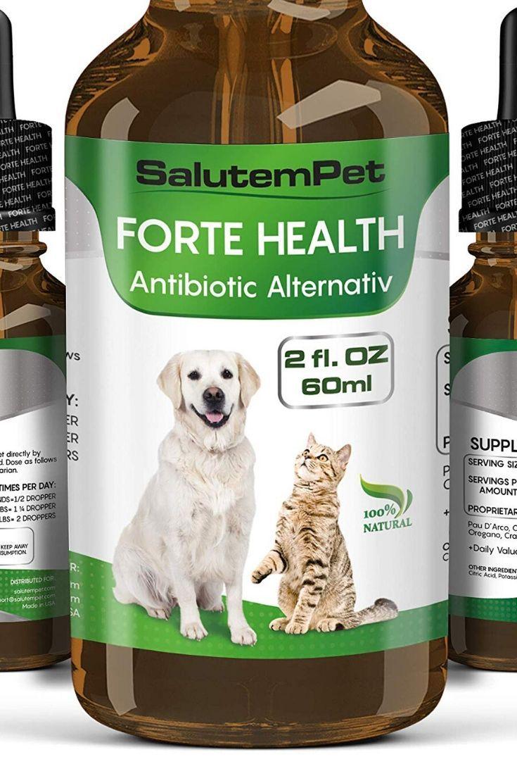 Natural ANTIBIOTICS for Dogs / ANTIBIOTICS Alternative