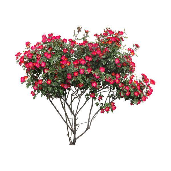 25 Png Photoshop Landscape Trees To Plant Plants