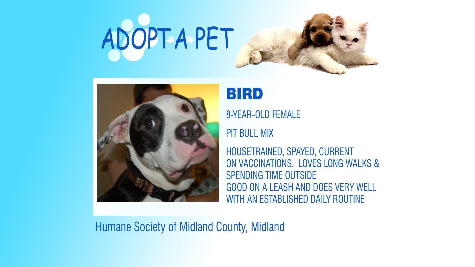 Adopt a Pet Tuesday Charlie, Bird & Hairy Northern