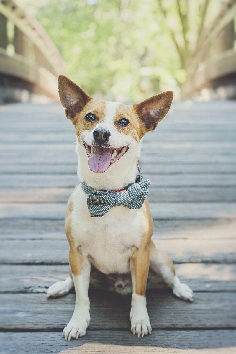 Studio Twelve:52 - Pet / Animal / Dog / Cat / Wedding / Engagement ...