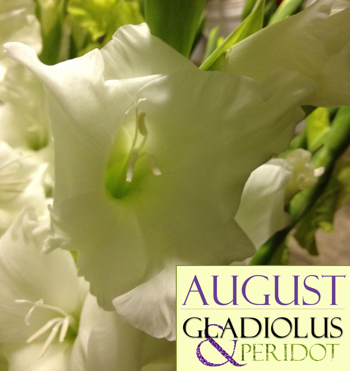 Happy august birthday from freytags florist augusts birth flower austin flower delivery freytags florist austin best austin florist izmirmasajfo