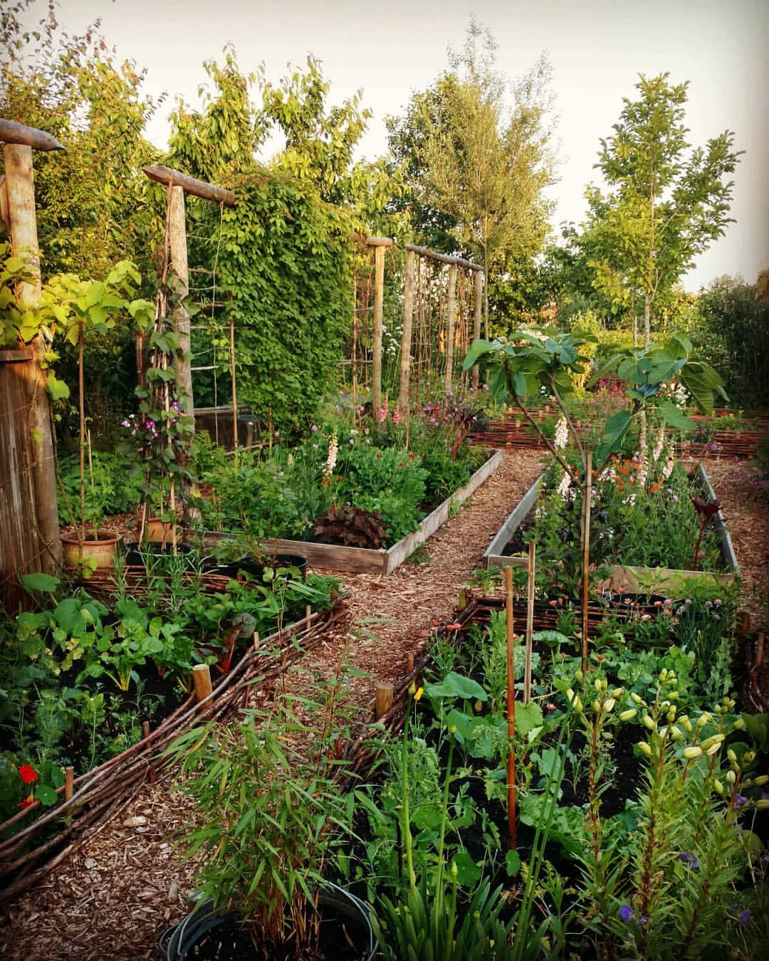 We Re Enjoying Growing More Vegetables This Year We Have 3
