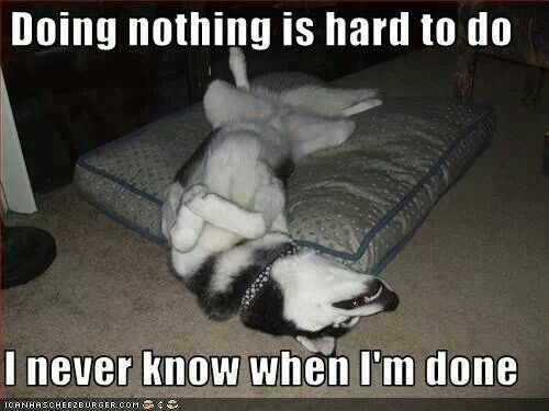 Funny Sleeping Meme : Lol looks like my husky sleeping upside down too huskies