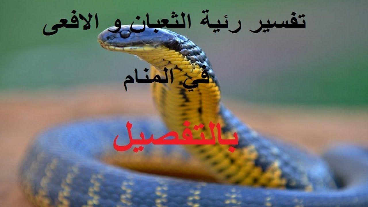 رؤية في المنام الثعبان او الحية او الافعى دلالاته المحمودة و الغير المحمودة Animals Snake