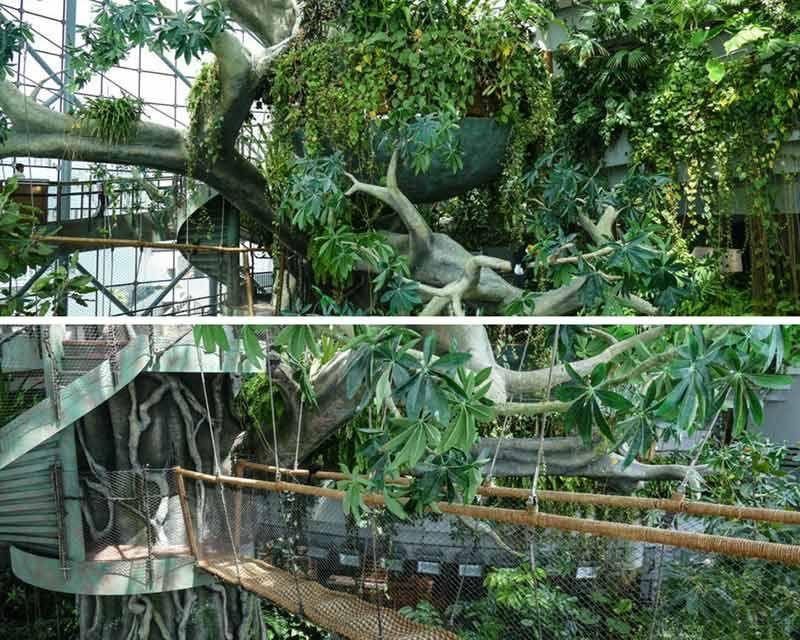 Green Planet Dubai Biodome Dubai Rainforest