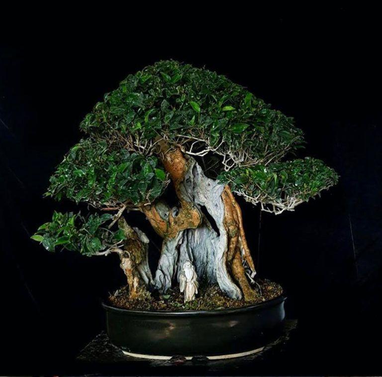 Pin By Georgi Game Of The Trone On Bonsai Bonsai Bonsai Tree Bonsai Art