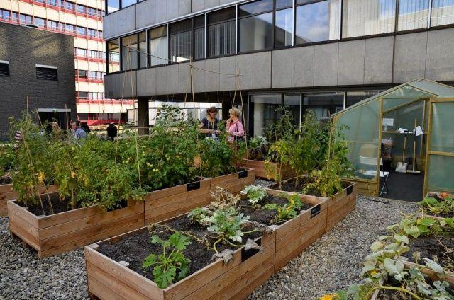 Image result for verhoging in tuin maken