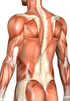 Soft tissues around the spine also play a key role in lower back ...