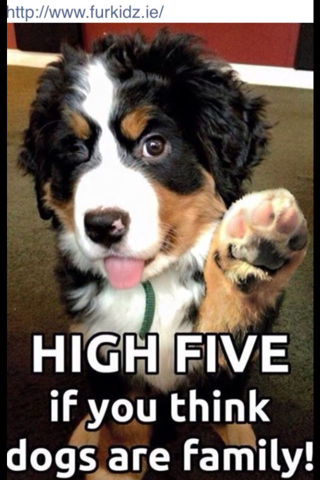 Furkidz Ie Dogs High Five Dog Quotes
