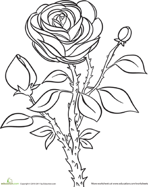 Rose Worksheet Education Com Rose Coloring Pages Coloring Pages Rose Stencil