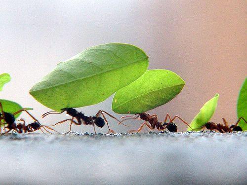 Formigas No Jardim Trabalho Em Equipe Hidroponia Alface E