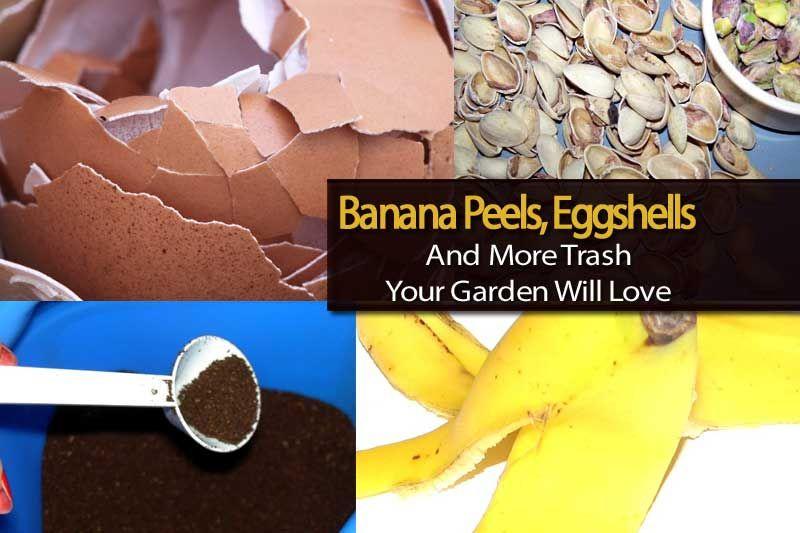 Banana Peels Eggshells And More Trash Your Garden Will Love