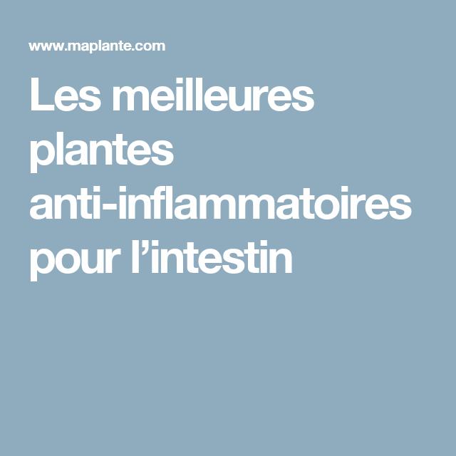 Les meilleures plantes anti-inflammatoires pour l'intestin (avec images) | Anti inflammatoire ...