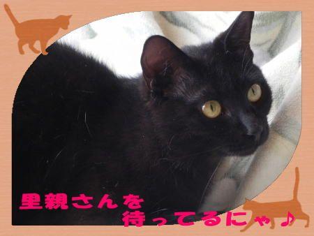 愛知県名古屋市で猫の里親募集 里親探し 愛知県名古屋市天白の待ちねこの会 里親 子猫 猫