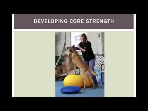 Developing Core Strength In The Canine Athlete Core Strength