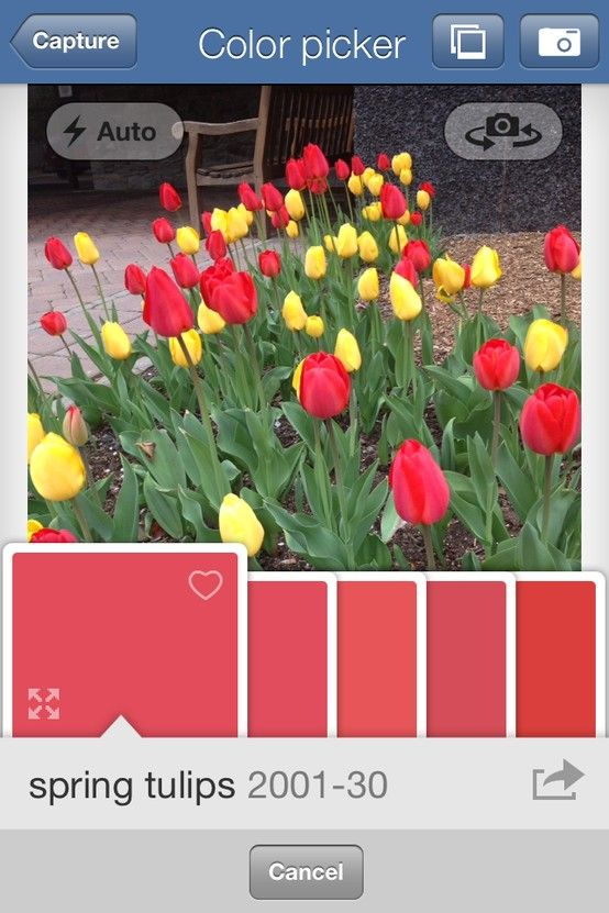 Brighten Your Day With Spring Tulips Color Picker