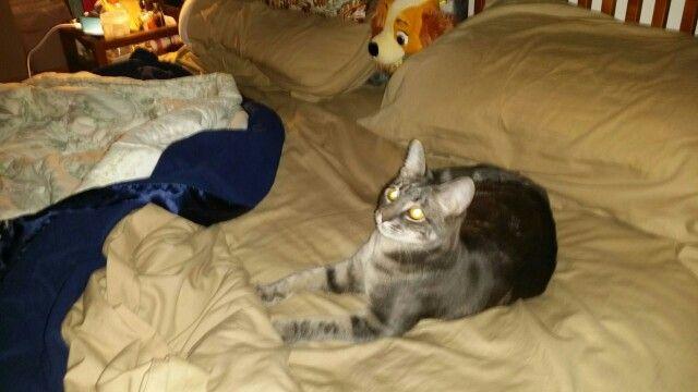 Fiona my kitten