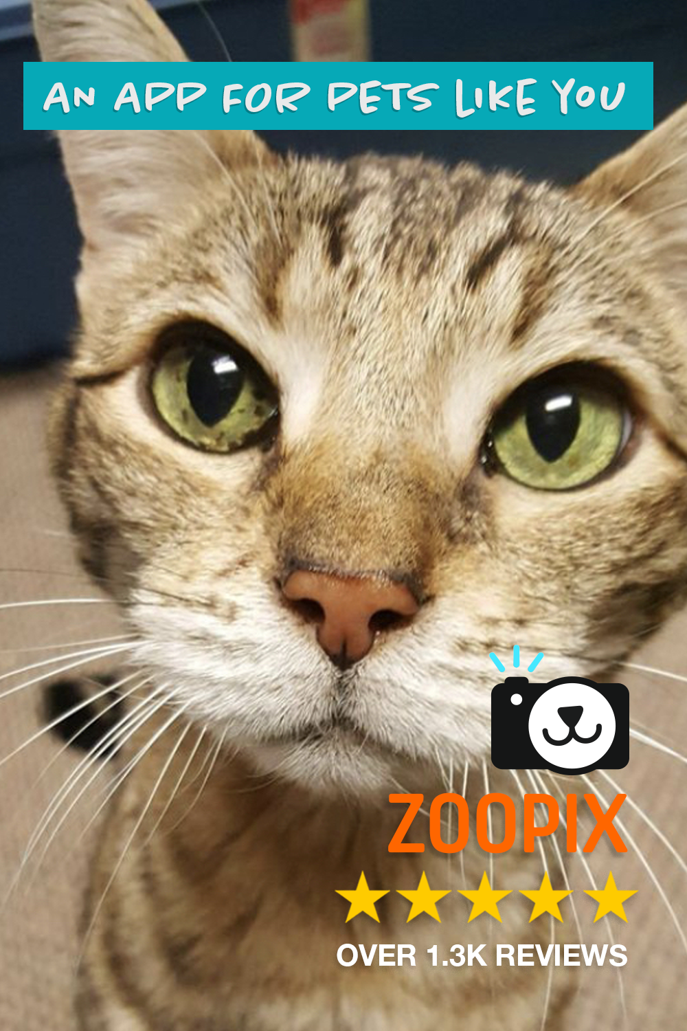 Zoopix The Best Social App For Pets Cute Cat Alert In 2020