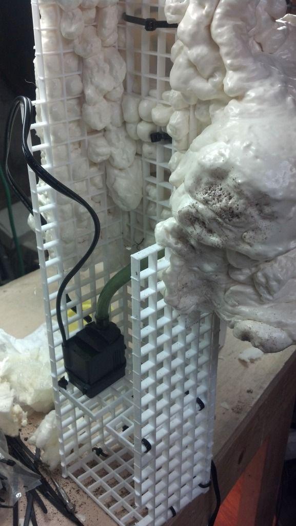 Thehydra Net View Topic 125 Gallon White S Tree Frog