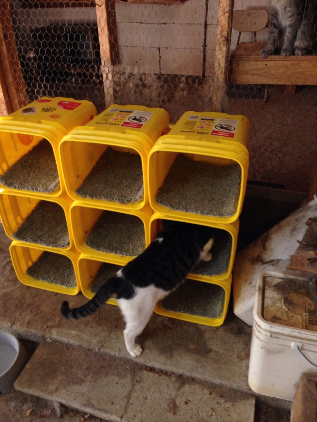 Cat condo in use! Made from tidy cat bucket! ★ More on