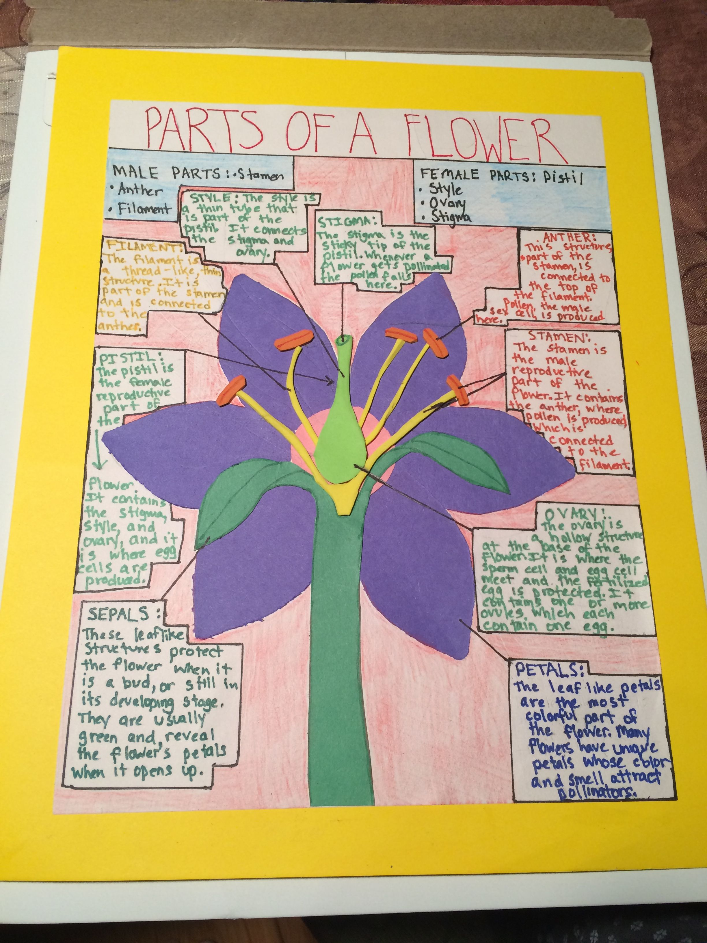 Flower Diagram Career Audio Spectrum Analyzer Circuit Parts Of A Poster Project For 7th Grade Science