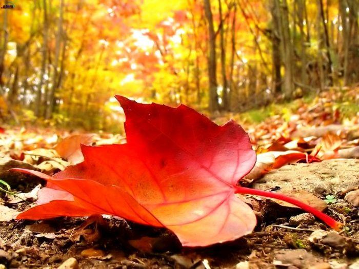 1001 jolies exemples d 39 images d 39 automne pour fond d 39 cran cran tomber et composition - Images d automne gratuites ...