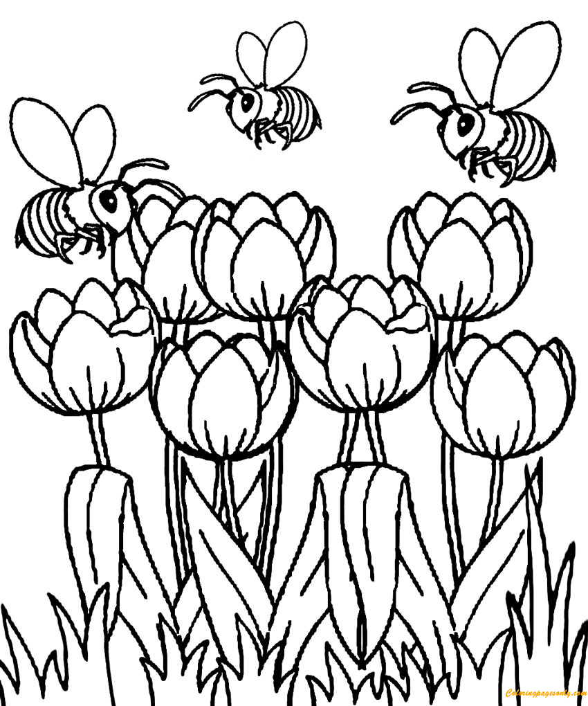 Beautiful Spring Tulip Coloring Page Coloring Pages For Kids And Adults The Spring Is The Seas Flower Coloring Pages Spring Coloring Pages Coloring Pages