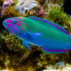Likeable freshwater tropical fish list with pictures as for Small freshwater aquarium fish