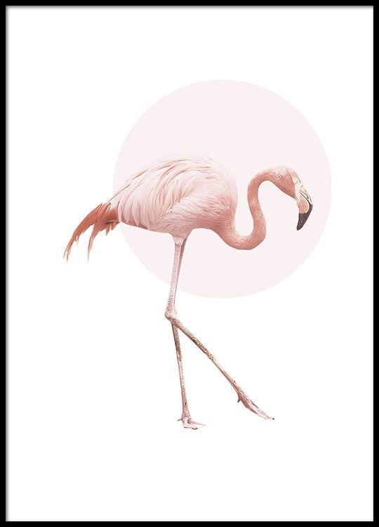 Juliste vaaleanpunaisella flamingolla