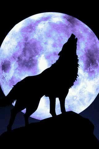 Loup Ou Loup Garou A La Pleine Lune Lobo Uivando Pra