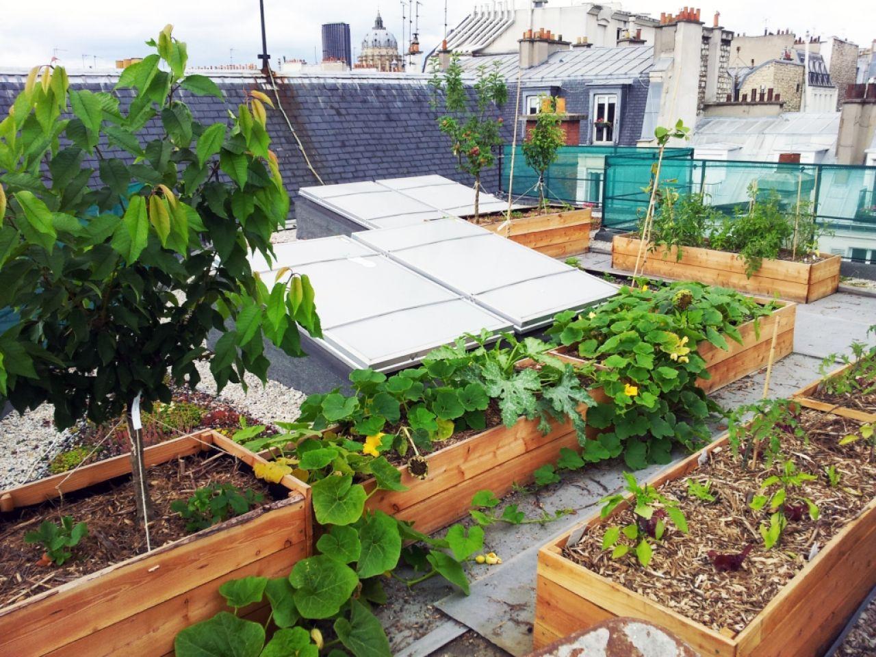 pas besoin de jardin des potagers sur les toits de nos immeubles z bu l 39 cosyst me des. Black Bedroom Furniture Sets. Home Design Ideas