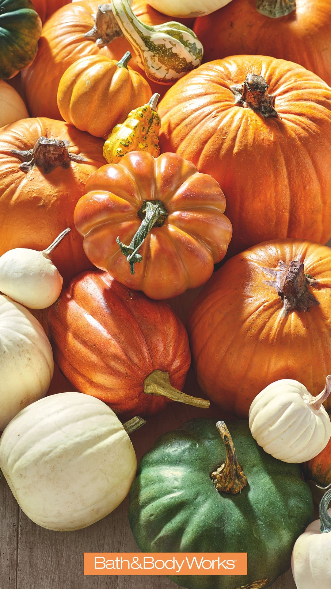 Pumpkin Iphone Wallpaper Pumpkin Fall Wallpaper Thanksgiving Iphone Wallpaper