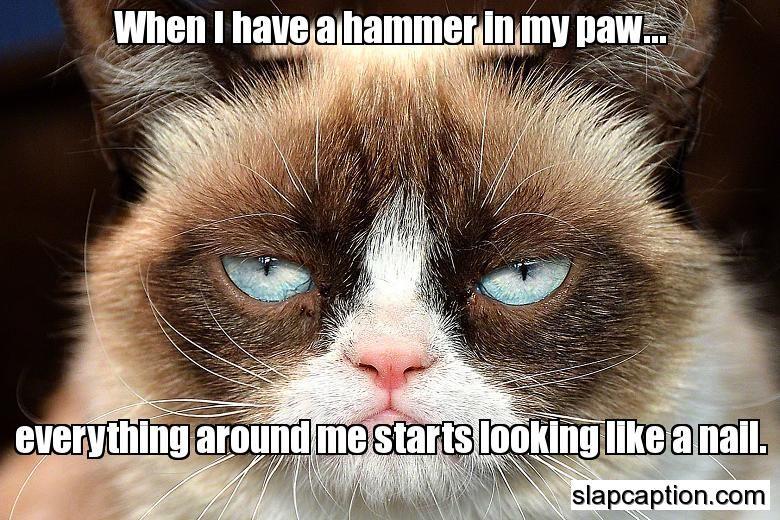 Watch out for Grumpy Cat Grumpy cat humor, Grumpy cat