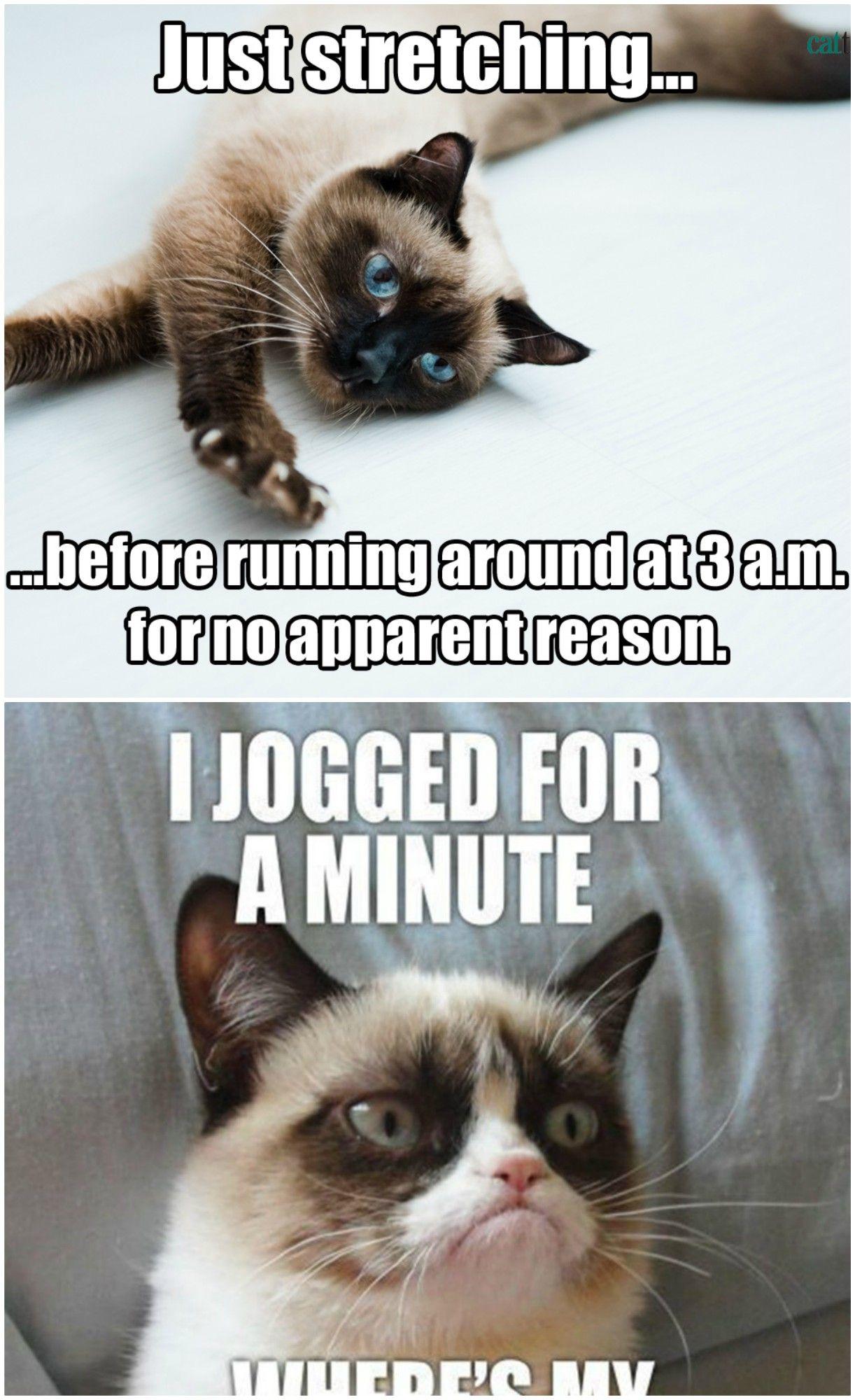 20 Best Grumpy Cat Memes Grumpy Cat Cats Cat Memes