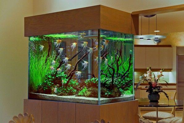 Resultado de imagem para aquario grande pinterest