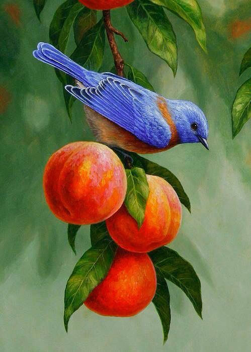 western bluebird and ripe peaches samsung galaxy s6 case. Black Bedroom Furniture Sets. Home Design Ideas