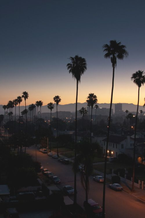 Travel Tumblr Los Angeles Wallpaper Los Angeles Palm Trees City Landscape