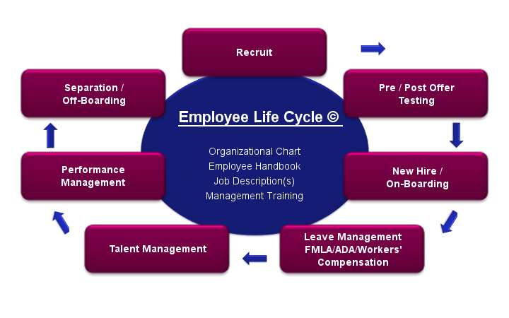 Employee Life Cycle  Human Resources