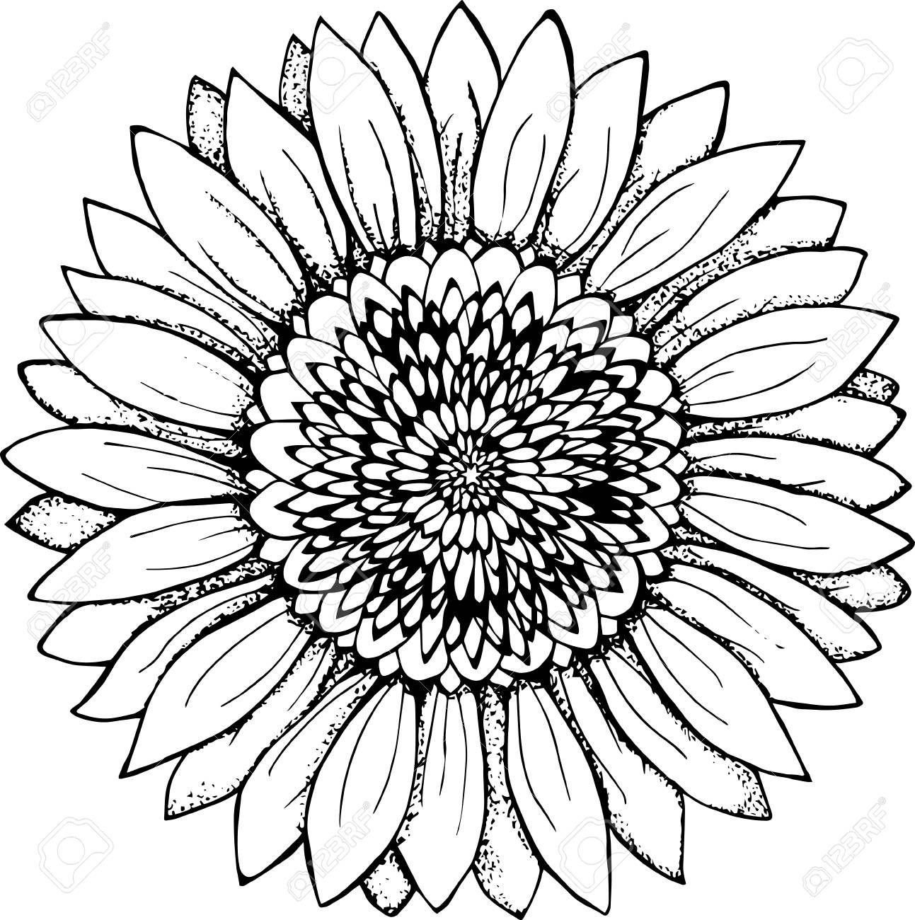 Resultado De Imagem Para Sunflower Clipart Black And White