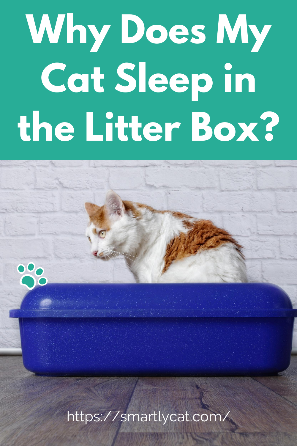Why Does My Cat Sleep In The Litter Box In 2020 Cat Sleeping Litter Box Litter