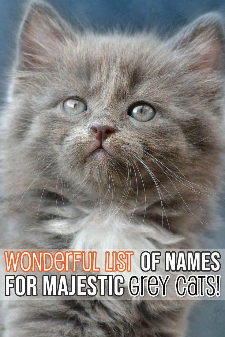 Pamper Your Cat With Girl Cat Names Kitten Names Grey Cat Names