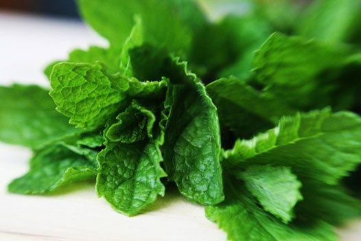 Dos and Donts of growing mint! food