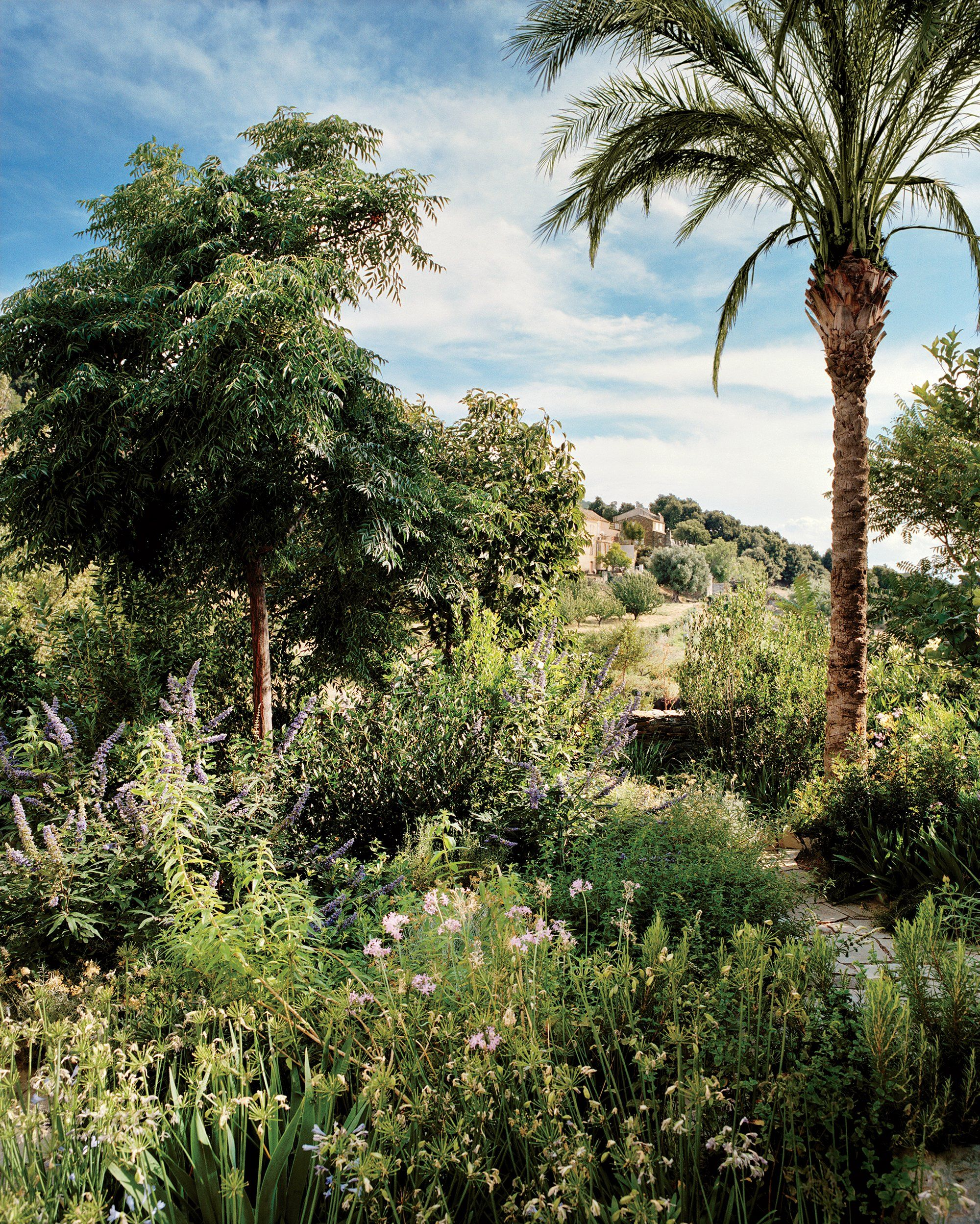 Mediterranean Terrain - An Egyptian palm tree amid lush plantings in on fairies gardens designs, french gardens designs, japanese gardens designs, english gardens designs, chinese gardens designs, mediterranean courtyard gardens designs, italian gardens designs,