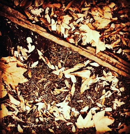 divided leaves