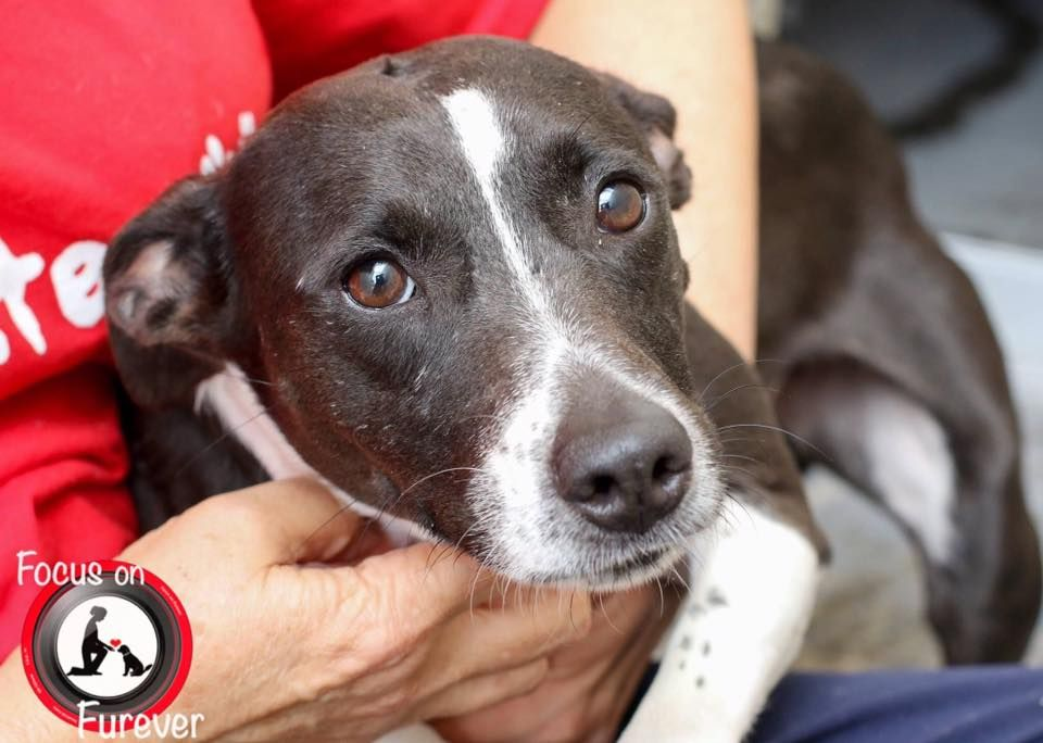 SCHEDULED TO DIE TUESDAY 5/23 7:00 AM-Nueces County, TX: Dogs in Need of Rescue I HAVE A HAPPY TAIL. WON'T BE HAPPY ONCE THEY KILL ME!  .  DELTA  A285477  Very happy girl loves to wag her tail. Wants to play and be loved.  Located at: CCACS, 2626 HOLLY ROAD, CORPUS CHRISTI, TEXAS  Email: ccacsrescues@cctexas.com or sotxshelterdogs@gmail.com to save  FOSTERS NEEDED SO RESCUES CAN TAG